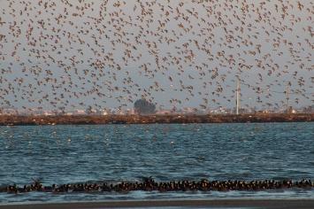 Milers d'ocells