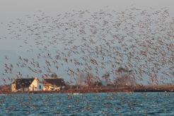 barraques i ocells Delta de l'Ebre