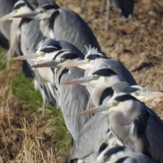 Delta de l'ebre. Birdwatching