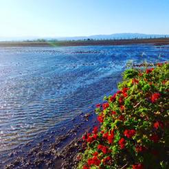L'aigua anega el delta