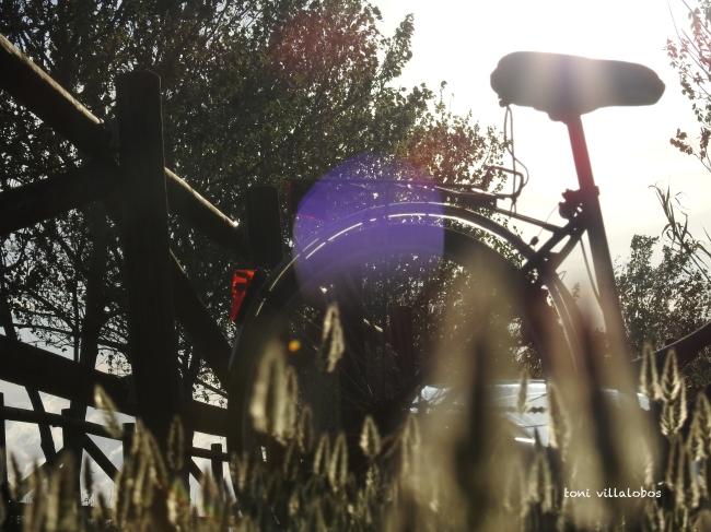 En bicicleta pel delta