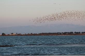 Estol d'ocells