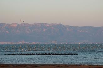 Observació d'aus al Delta