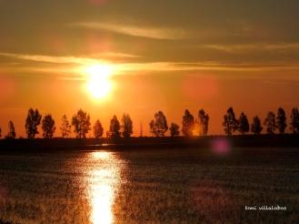 Sortida de sol al Delta