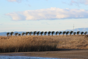 Dia de vent al delta de l'ebre