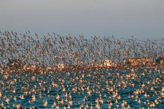 Delta de l'Ebre terra d'ocells